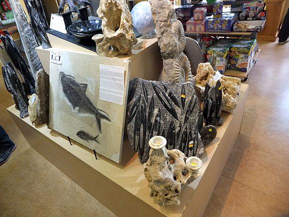 souvenir-fossil