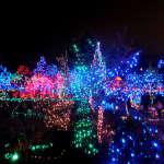 """冬限定・地元の人で混雑するバンデューセン植物園のイルミネーション""""Festival of Lights"""""""