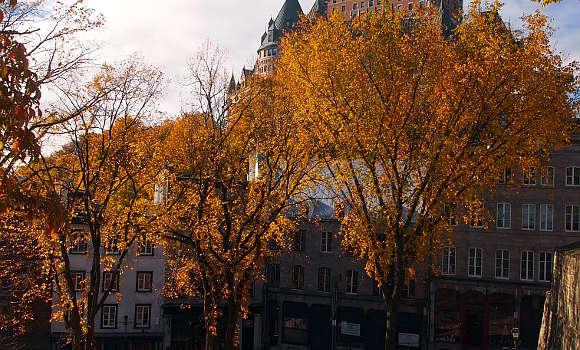 カナダは紅葉ツアーのメッカ・国旗にもなっているメープル(かえで)はオンタリオ州・ケベック州が有名